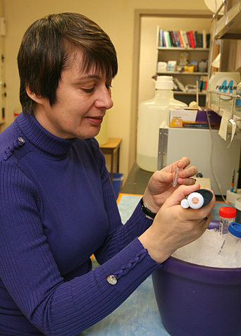 Dr. Maria Diakonova prepared DNA probes from human breast cancer cells. The probes are used for polymerase chain reaction to test the expression of proteins that regulate cell motility and invasiveness.