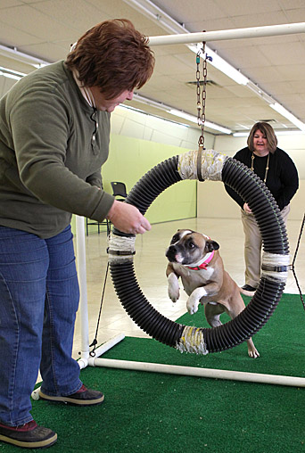 Gretel, a rescued pit-bull mix that is up for adoption, jumped through a ring for a treat held by dog trainer Carol Humberger as Cindy Reinsel watched at the new PET Bull Project Education Center.