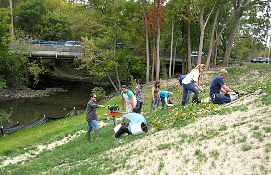 Volunteers associated with the President's Commission on the River and Toledo Early College High School worked last fall to help put in native trees and plants as part of the restoration project under way on Main Campus.