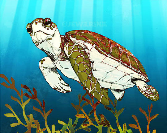 This turtle is one of many sea life illustrations created by Jewel Davenport.