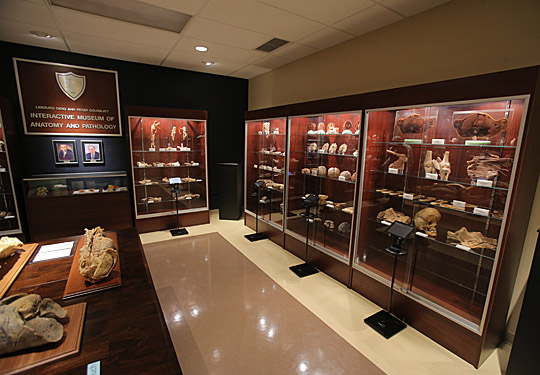 Ut News Blog Archive New Interactive Museum Of Anatomy And