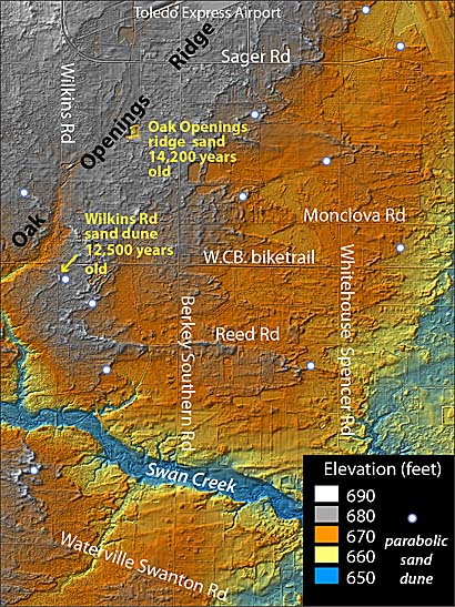 This digital elevation model by Dr. Tim Fisher shows the Oak Openings Ridge (at grey elevations) formed initially as a spit of land built into glacial Lake Warren about 14,200 years ago. After Lake Warren drained, wind from the west reworked much of the sand into thousands of parabolic-shaped sand dunes that migrated onto the flat lake plain east of the spit, according to the UT professor. Only a few of the dunes are indicated by the white circles. The Wilkins Road dune just south of the bike trail was found to be 12,500 years old. Other sand dunes in the area range between 13,000 and 8,200 years old. The distribution of the flora and fauna in the Oak Openings region, much of it on state endangered lists, has adapted to this unique sandy environment.
