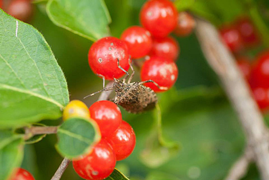 """""""Bug Berries"""" by Nico Francis-Emonds was the first-place winner in the youth category."""