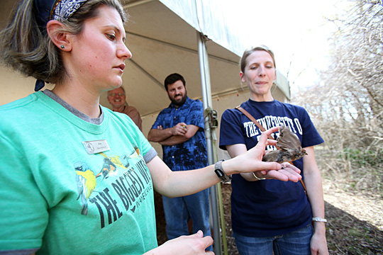 Kate Zimmerman, the education director for the Black Swamp Bird Observatory, left, and UT student Jeanna Meisner released a banded American tree sparrow.