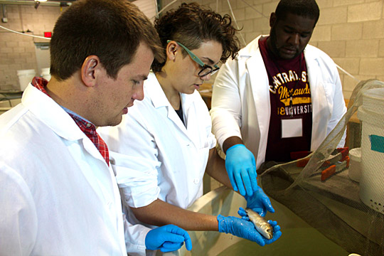 Nate Marshall, a UT graduate student and a mentor for the National Science Foundation Research Experiences for Undergraduates program, left, watched as Hannah Scheppler, a senior at Bowling Green State University, center, and Jochannan Mitchell, a junior at Central State University, examined a juvenile grass carp, a type of invasive Asian carp, at the Lake Erie Center.