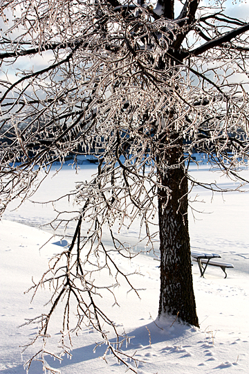 "Michele ""Mickey"" Ross took this photo titled ""Ice Tree"" at Olander Park in Sylvania."