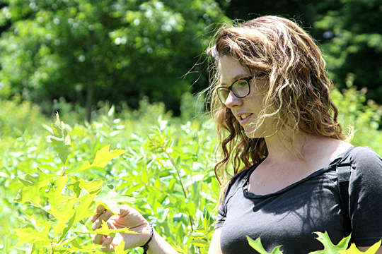 UT graduate student Sara Guiher pointed out a black oak at the Kitty Todd Nature Preserve in Swanton. Black oak is one of the native species that the Green Ribbon Initiative is trying to protect.