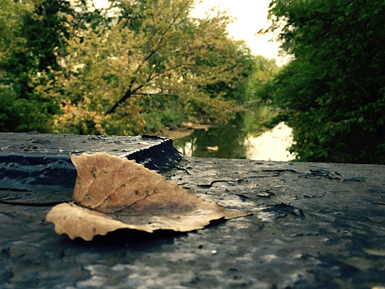 """The Descent to Fall"" by Sarah Dooley won first place in the 2015 Student River Photography Contest."