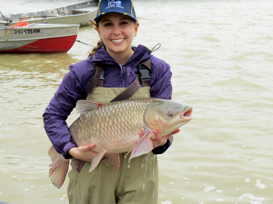 Ut news blog archive ut researcher discovers first for Maumee river fishing