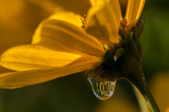 """Dewdrop Flower Closeup,"" photography, by Dr. Rick Francis, director of research and sponsored programs"