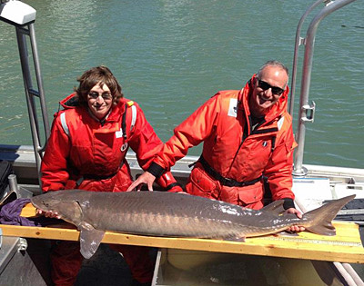 Eric Stadig, left, and Jim Boase posed with an adult lake sturgeon in this photo courtesy of the U.S. Fish and Wildlife Service.