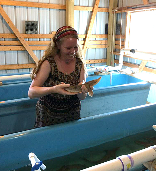 UT PhD student Jessica Sherman held a lake sturgeon at the Black Lake Fish Hatchery, located near Onaway, Mich., in this photo courtesy of the Michigan Department of Natural Resources.