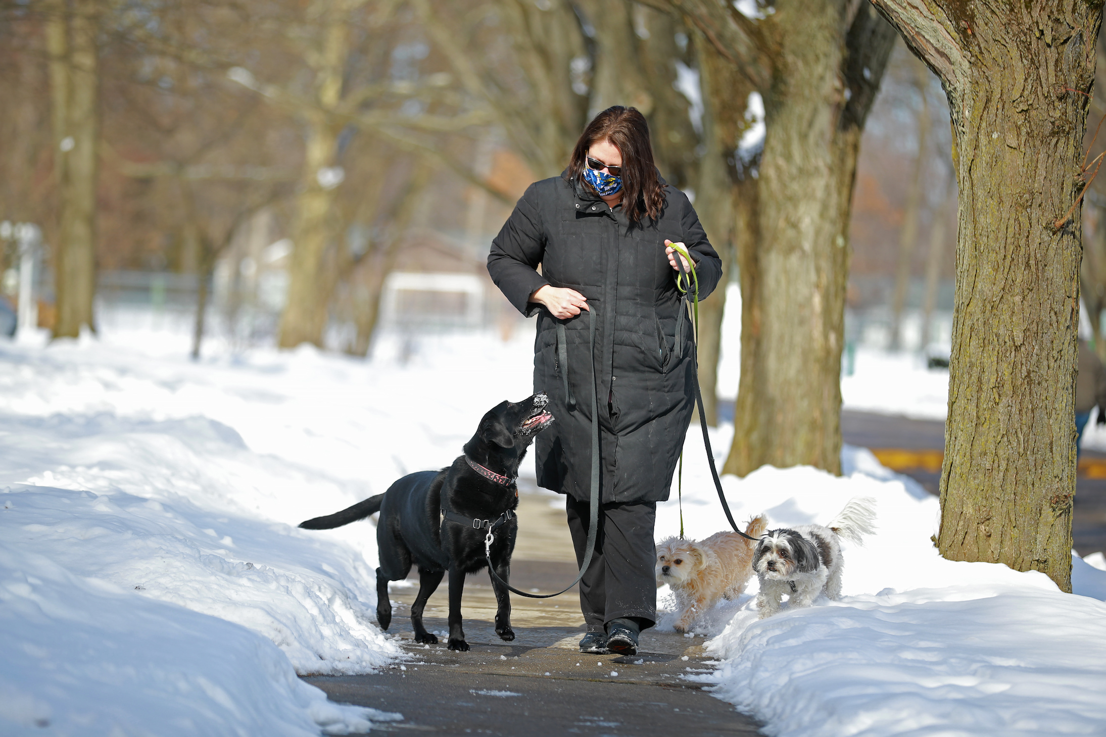 Dr. Janet Hoy-Gerlach walking her three dogs in the snow